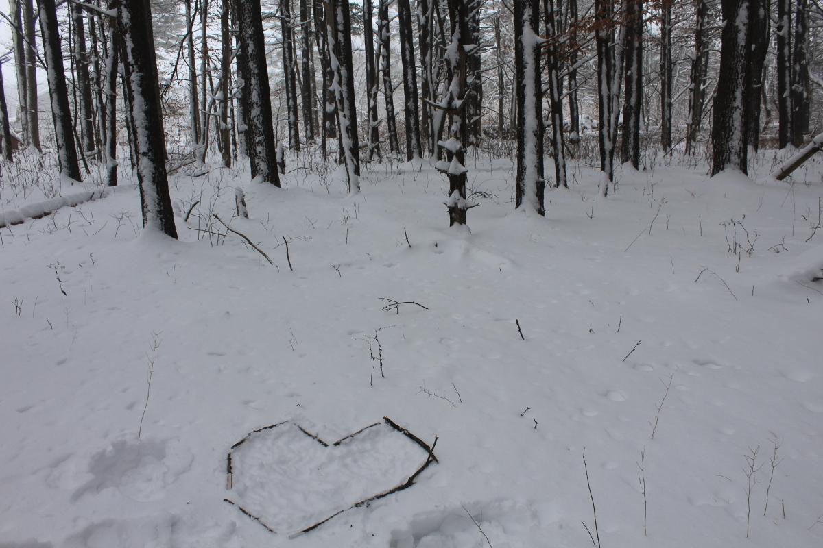 heart in woods