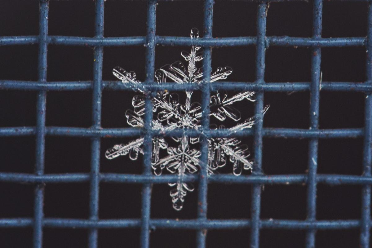 snowflakes-ElizabethFoxPhotography